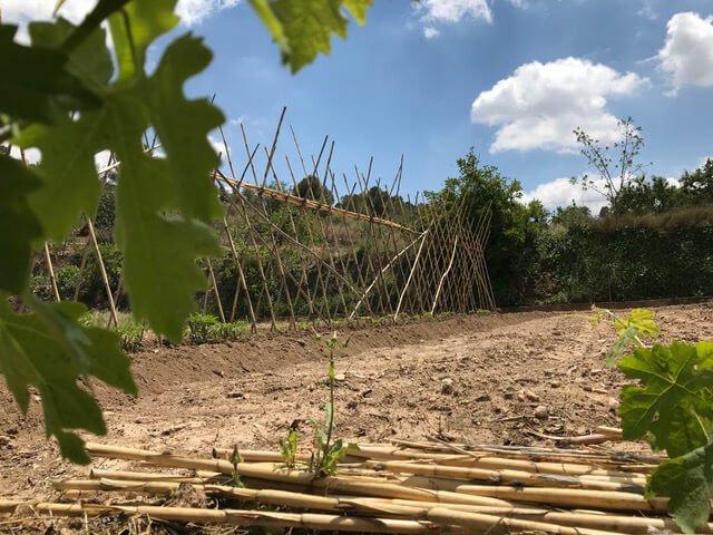 Cultivos en Sierra Espuña