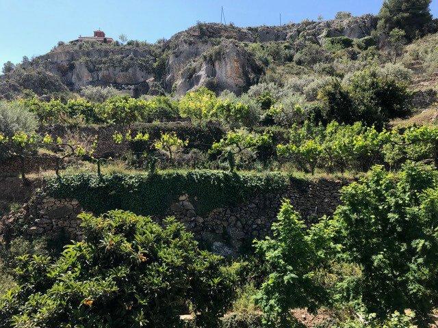 Plantaciones agroecológicas en Sierra Espuña